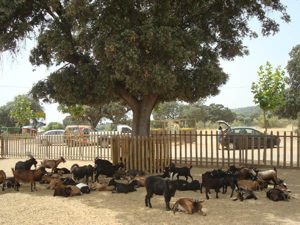 Rincón de los Mansos en el Safari de Madrid