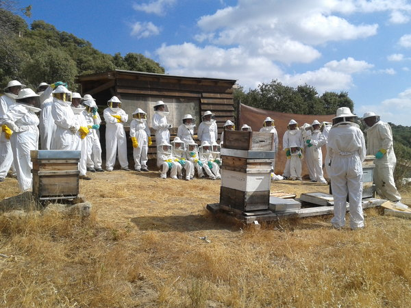Descubriendo a las abejas en el Colmenar del Aula Apícola Sierra de Hoyo: Supertribus