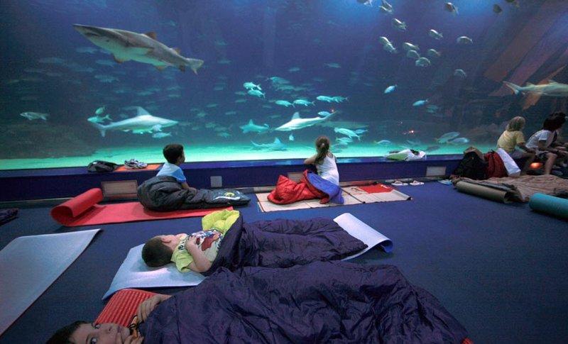 Durmiendo entre tiburones