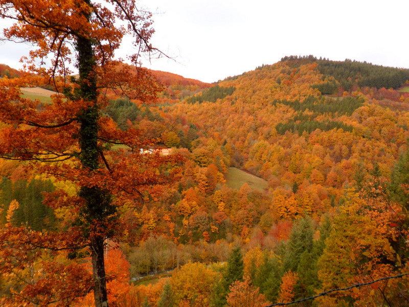 """Selva de Irati: Foto de """"Andara Rutas"""""""
