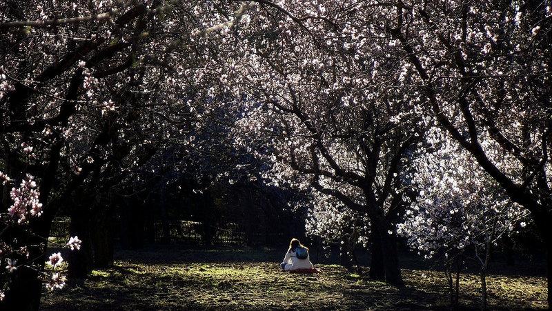 Parque Quinta de los Molinos_Foto de Bob Fisher (Flickr)
