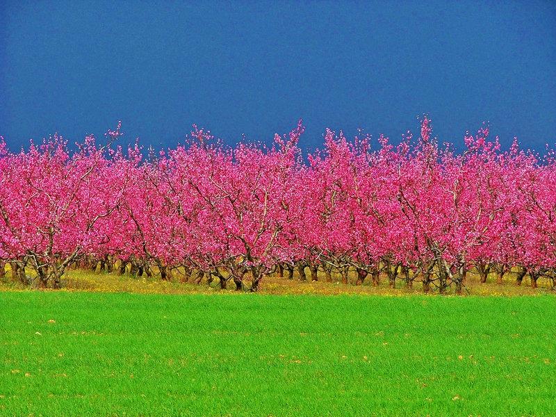 Torroella de Fluvià_Foto de Roberto Al (Flickr)