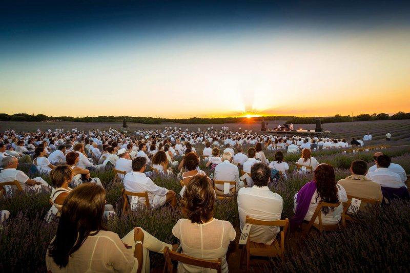 Festival de la Lavanda Conciertos y más