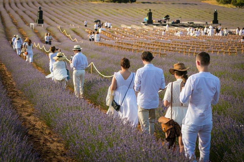 Festival de la Lavanda en Brihuega Conciertos y Más