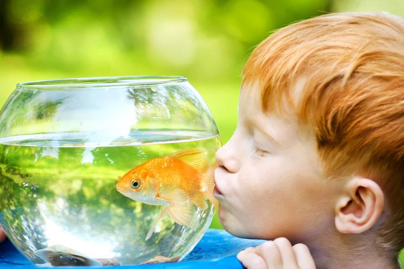 Cuidado de Seres Vivos Actividades Montessori Verano en Supertribus